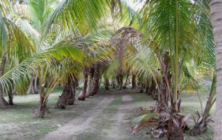 Bahamas Grundstück auf Andros, 6