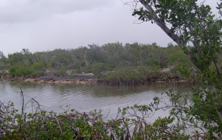 Bahamas Grundstück auf Andros, Creek 1