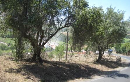 Grundstück Alenquer, Ansicht 15