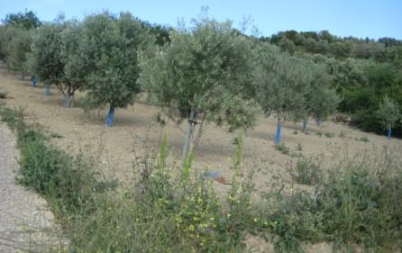 Grundstück Alenquer, Ansicht 28