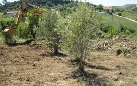 Grundstück Alenquer, Ansicht 6