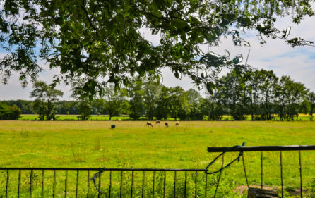 Blick von dem hinteren Teil des Grundstücks