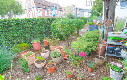 Garten Ansicht 13