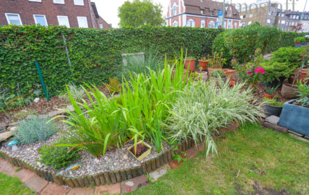 Garten Ansicht 8